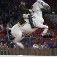 Den spanske rideskole i wien 2